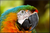 Parrot by Foxfire66, photography->birds gallery