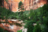 Hiking in Zion by jeenie11, photography->landscape gallery