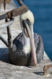 Hiding by Skynet5, Photography->Birds gallery