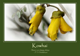 Kowhai Poster by LynEve, photography->flowers gallery