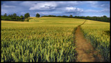 Field of Wheat 2 by Mannie3, photography->landscape gallery