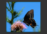 Butterfly Wings #3 by tigger3, Photography->Butterflies gallery