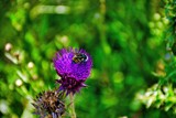I'll Bee Seeing You by gr8fulted, photography->flowers gallery
