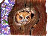 Owl Drawing 2006 by andy721, Illustrations->Traditional gallery