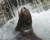 Exhilaration! by garrettparkinson, photography->animals gallery