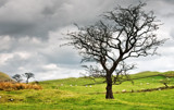 Green Pastures by PatAndre, Photography->Landscape gallery