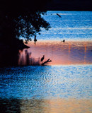 Evening with the Herons (2) by Pistos, photography->sunset/rise gallery