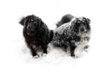 Snow-Capped Borders by Nikoneer, photography->pets gallery