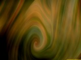 Croton Swirl by monkeypuzzle, abstract gallery