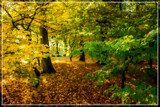 Painterly Effect by corngrowth, photography->nature gallery