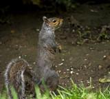 Peek a Boo by biffobear, photography->animals gallery