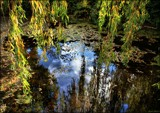 The willows are weeping . . . by LynEve, photography->nature gallery