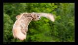 In Flight 4 by kodo34, Photography->Birds gallery