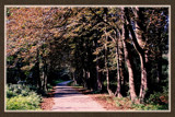Walcheren Country Roads & Paths 12 by corngrowth, Photography->Landscape gallery