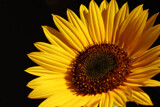 Sunny by jerseygurl, photography->flowers gallery