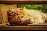Sleepy Kitty by Eubeen, photography->pets gallery