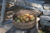 fall harvest by fivepatch, photography->food/drink gallery