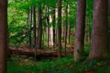 Fallen Timbers by casechaser, photography->landscape gallery