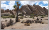 Joshua Tree by hewymom, Photography->Landscape gallery