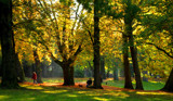 Fall in the park by rozem061, photography->landscape gallery