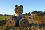 Meet Mr Haybale by LynEve, photography->general gallery