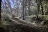 Into the woods... by biffobear, photography->general gallery