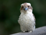 I Lost My Mum... by trisbert, Photography->Birds gallery