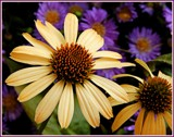Color Combo by trixxie17, photography->flowers gallery
