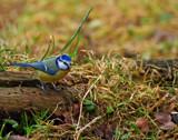 Waiting by biffobear, photography->birds gallery