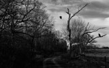 The Hanging Tree by 0930_23, contests->b/w challenge gallery