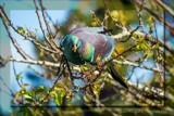 Hungry Bird by slushie, photography->birds gallery