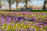 Full Spring In Holland by corngrowth, photography->flowers gallery