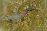 Stalking by garrettparkinson, photography->birds gallery