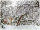 Still Snowing !! by trixxie17, photography->landscape gallery