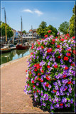Zierikzee Town Harbor 2 by corngrowth, photography->flowers gallery