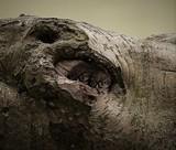 watching me by biffobear, photography->birds gallery