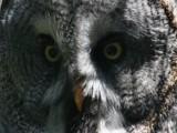 Look into my eyes by Paul_Gerritsen, Photography->Birds gallery