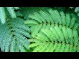 Study of Fern 1 by noobguy, Photography->Nature gallery
