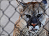 Caged by HanneK, Photography->Animals gallery