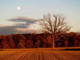 An  Autumn Glow! by marilynjane, Photography->Landscape gallery