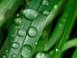 Grass Drops by MiLo_Anderson, Photography->Macro gallery