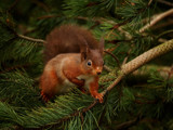 Red amongst the green.. by biffobear, photography->animals gallery