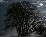 Scarey tree 2 by biffobear, photography->manipulation gallery