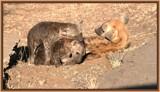 Mum............help!! by SusanVenter, Photography->Animals gallery