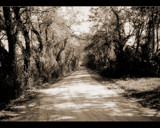 Audrie's Lane by carzie, Photography->Landscape gallery