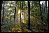 Forest tales by ekowalska, photography->landscape gallery