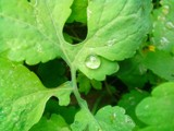 Leaf and little raindrop by killahsting, photography->nature gallery