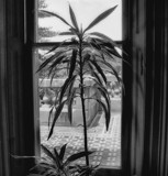 Through A Window by LynEve, contests->b/w challenge gallery