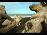 Beach Sculpture by TrailGypsy, Photography->Shorelines gallery