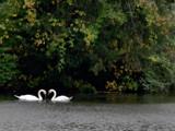 Symbols of Love by wheedance, Photography->Birds gallery